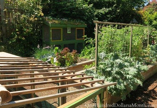 Seattle Chicken Coop and Urban Farm Tour