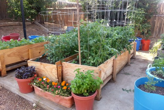 Gardening in small spaces container gardening one - Growing in small spaces image ...