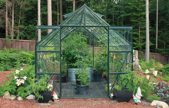 Growing Greenhouse Tomatoes And Cucumbers In The Pacific Northwest One Hundred Dollars A Month