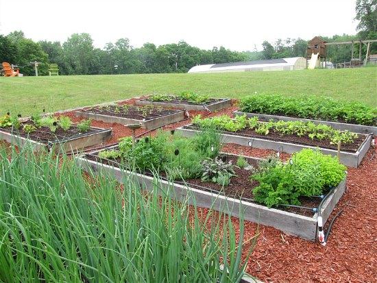 garden boxes raised garden beds