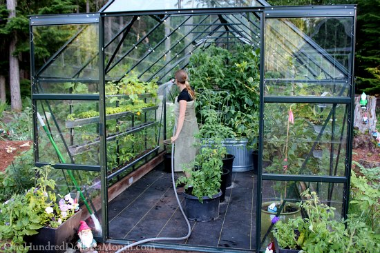 Greenhouse Vegetable Gardening One Hundred Dollars A Month