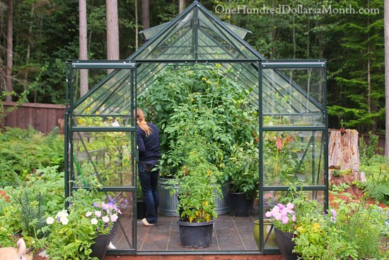 Greenhouse Vegetable Gardening  Tomatoes, Cucumbers, Peppers, Strawberries  And Lemons   One Hundred Dollars A Month