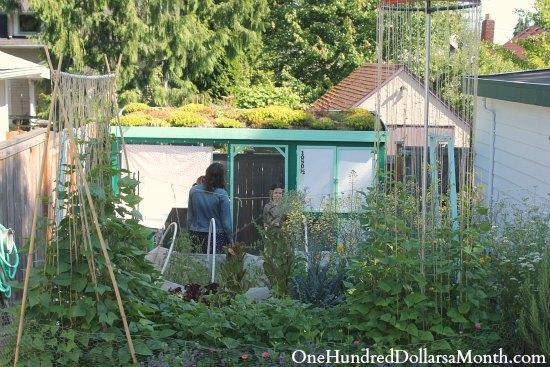 chicken coop green roof