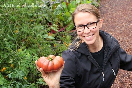 purple Cherokee heirloom tomato