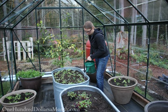 Winter Gardening Greenhouse Mavis Butterfield