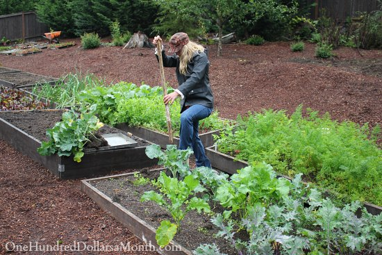 How To Find Vegetable Starts For Your Garden In October
