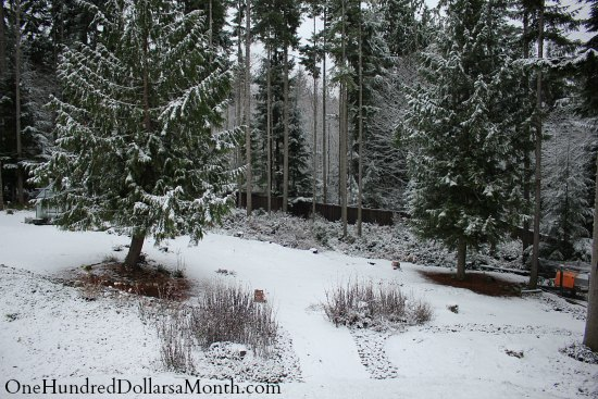 wooded backyard covered in snow