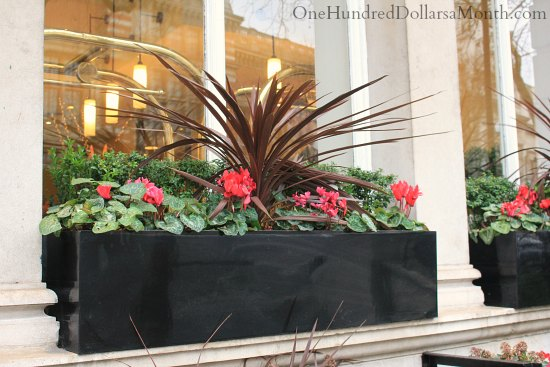 flower box ideas window box ideas for late winter and early one 29416