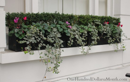 Window Box Ideas for Later Winter and Early Spring