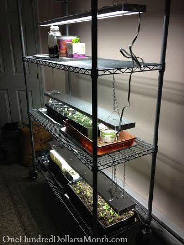 indoor grow lights