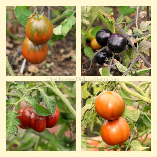 heirloom-tomato-pictures