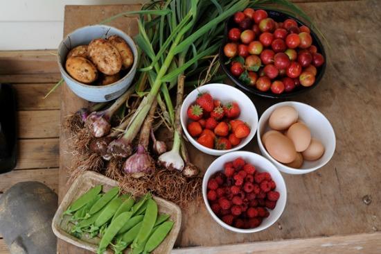 december harvest Tasmania, Australia