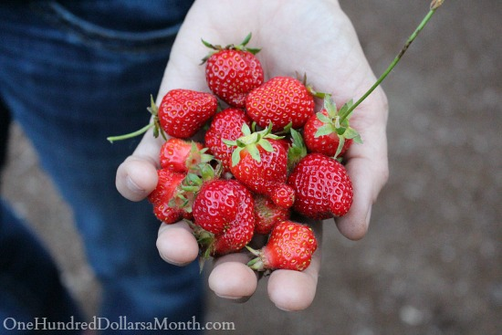 garden fresh strawberries