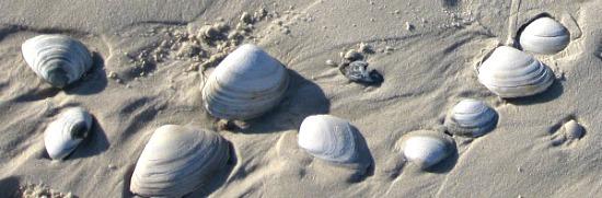 shells on beach