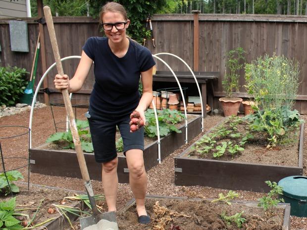 digging-up-potatoes