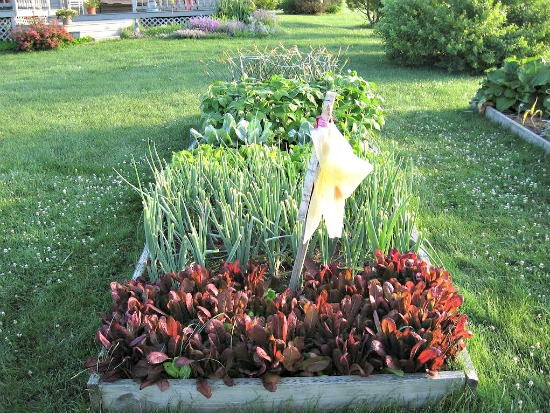 Joy from michigan sends in pictures of her garden and garden shed one hundred dollars a month - Garden sheds michigan ...