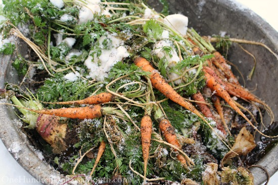 winter vegetables with snow