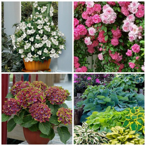 cottage farms flowers