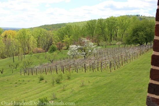 Monticello vineyard