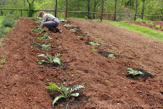 planting vegetables at Monticello