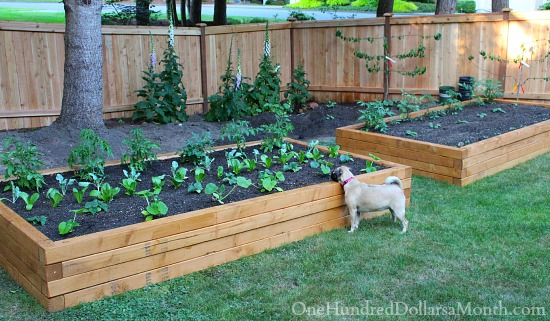 How To Build Raised Garden Beds For Growing Vegetables One Hundred Dollars A Month