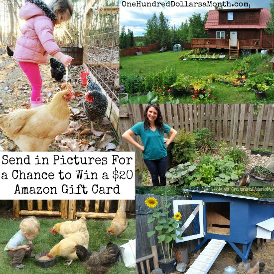 Send-Pictures-of-Your-Garden-For-a-Chance-to-Win-a-20-Amazon-Gift-Card