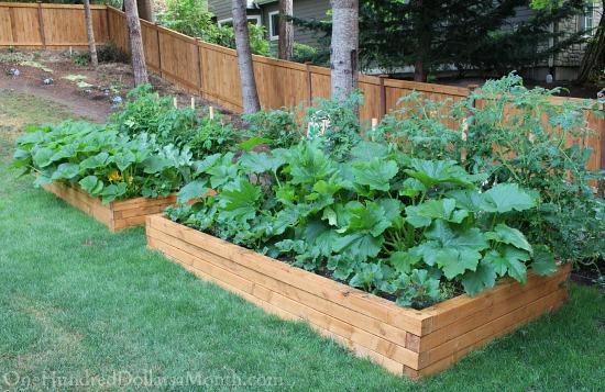raised garden boxes douglass fir