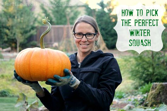 How to Pick the Perfect Winter Squash