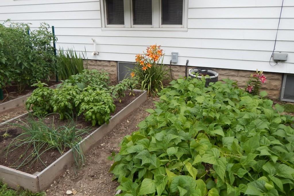 Tammy garden pictures1