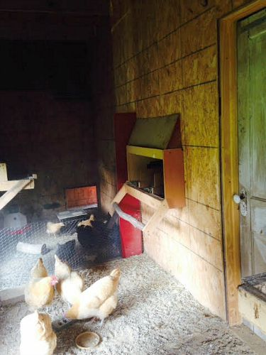 chicken coop pictures and ideas
