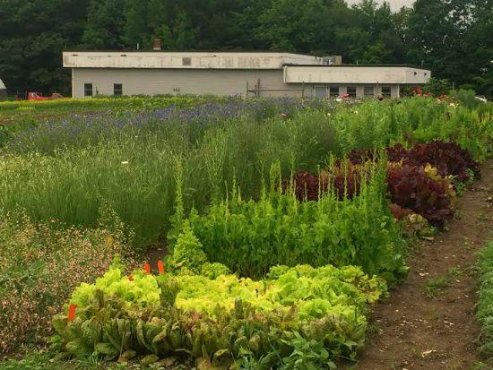 johnnys test gardens maine