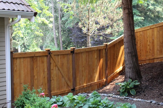 stained cedar fence