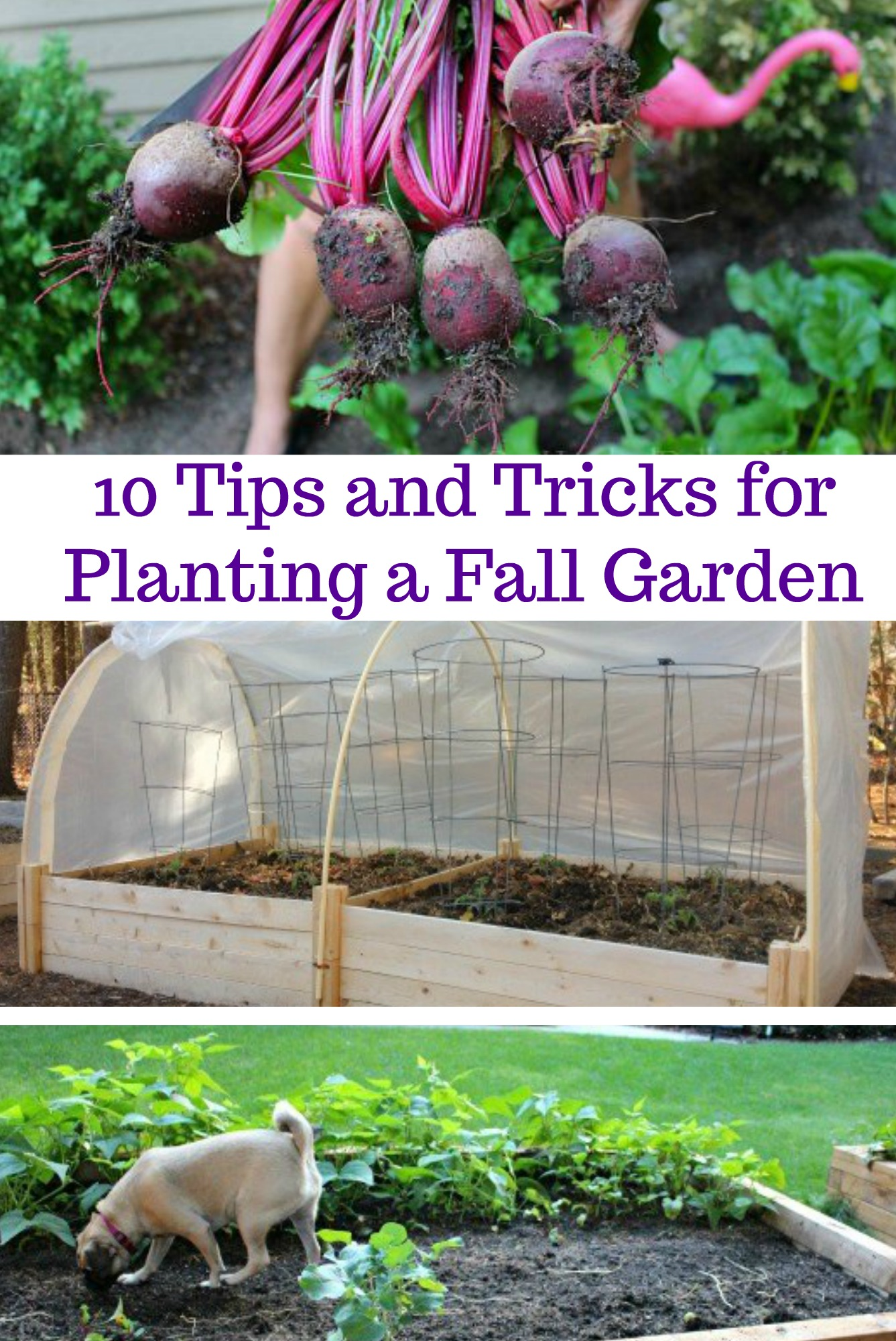 10 Tips and Tricks for Planting a Fall Garden e Hundred Dollars