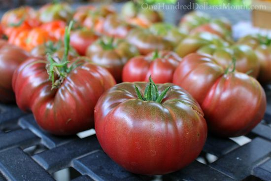 heirloom purple cherokee tomatoes