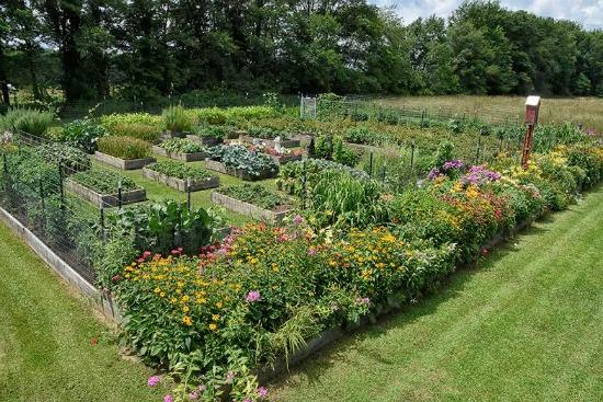 raised garden bed photos