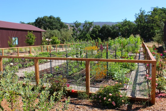 fenced in garden area