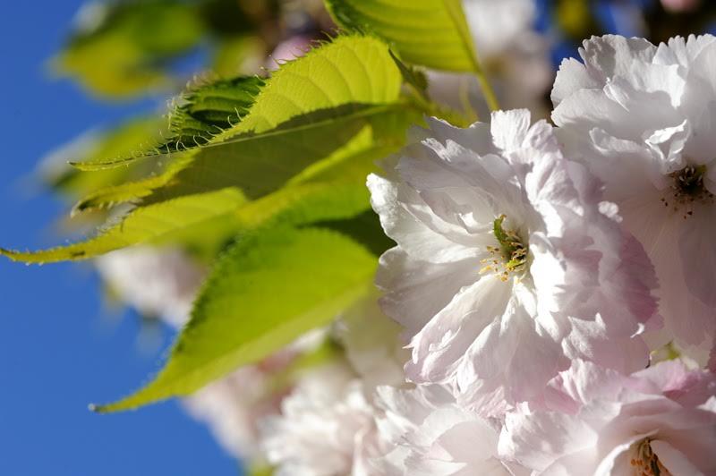 spring-flowers7